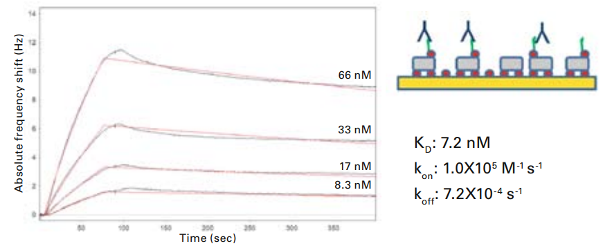 Kinetic & Affinity Characterization – Polyclonal Antibodies