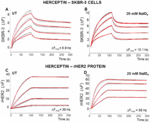 Cellular glycosylation affects Herceptin binding and sensitivity of breast cancer cells to doxorubicin and growth factors